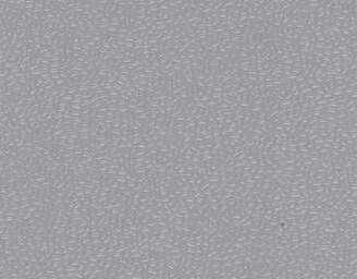 Grey - scanmobile
